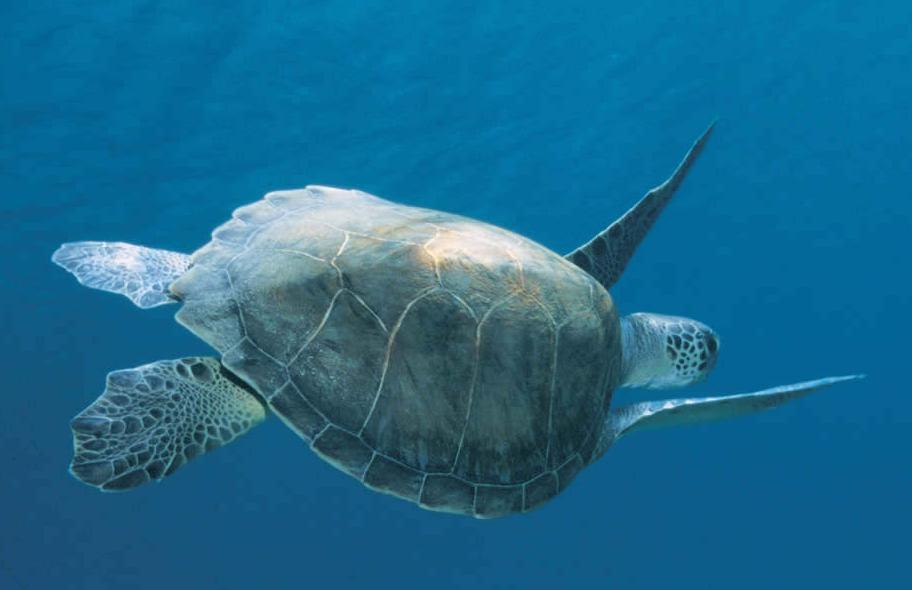 Il parco divertimento per bambini da vivere con tutta la for Acquario di tartarughe